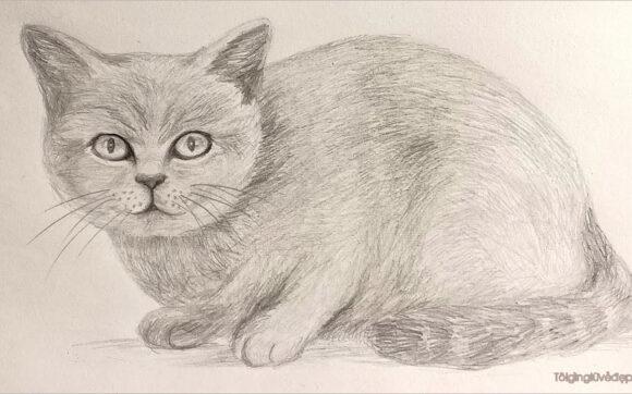 Cách vẽ mèo đơn giản, dễ thương