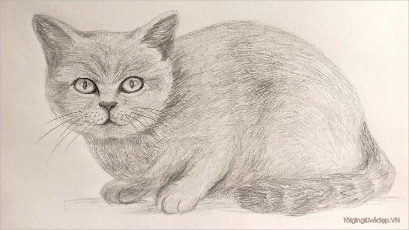 Vẽ phác hoạ đầu mèo