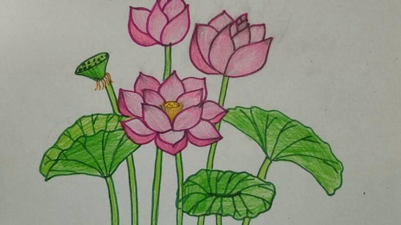 Cách vẽ những bông hoa Sen đơn giản mà đẹp