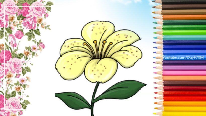 Cách vẽ và tô màu bông hoa