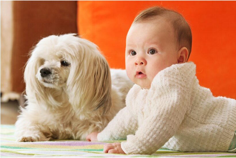 Hình ảnh baby bên cạnh cún con siêu yêu