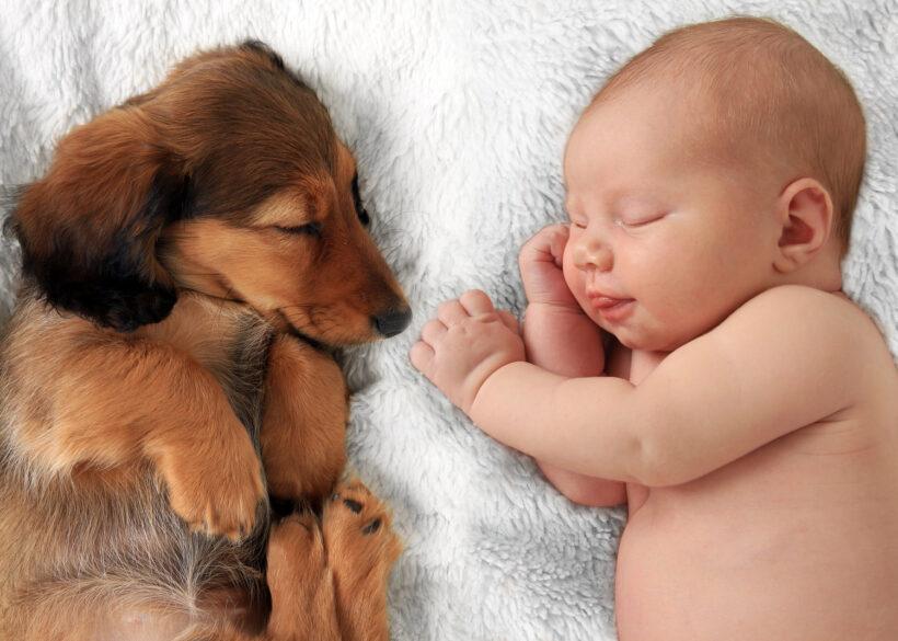 Hình ảnh baby và chó con siêu yêu