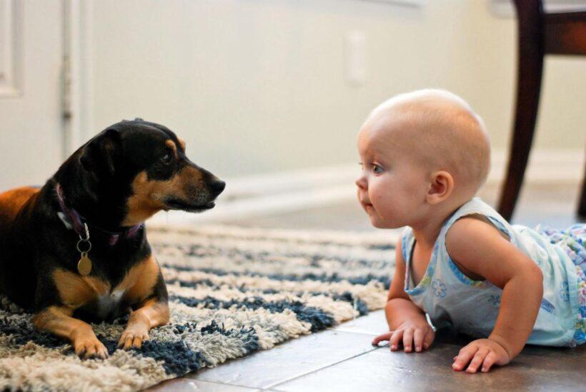 Hình ảnh baby và chú chó ngộ nghĩnh