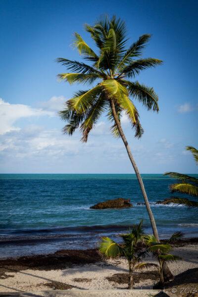 Hình ảnh cây dừa bên bờ biển