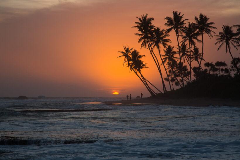 Hình ảnh cây dừa bên bờ biển buổi chiều tối