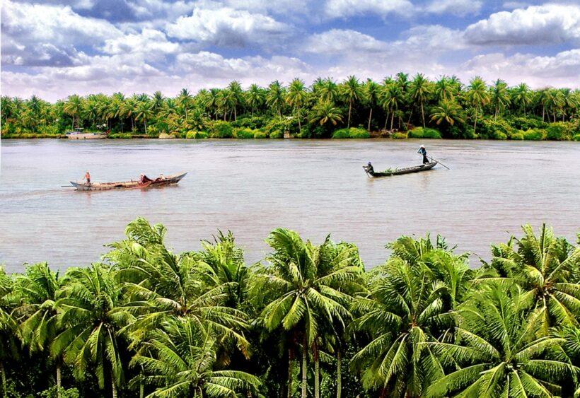 Hình ảnh cây dừa Bến Tre