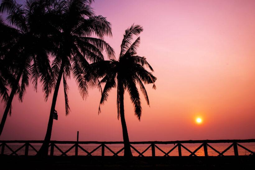 Hình ảnh cây dừa chiều hoàng hôn