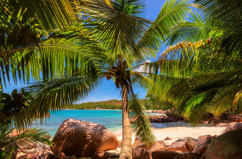Hình ảnh cây dừa chuẩn HD