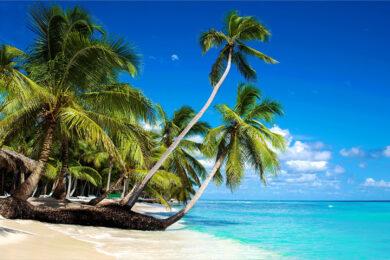 Hình ảnh cây dừa đẹp, chất lượng cao