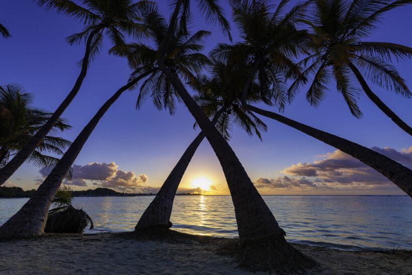 Hình ảnh cây dừa đẹp chuẩn HD