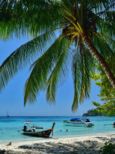 Hình ảnh cây dừa làm hình nền
