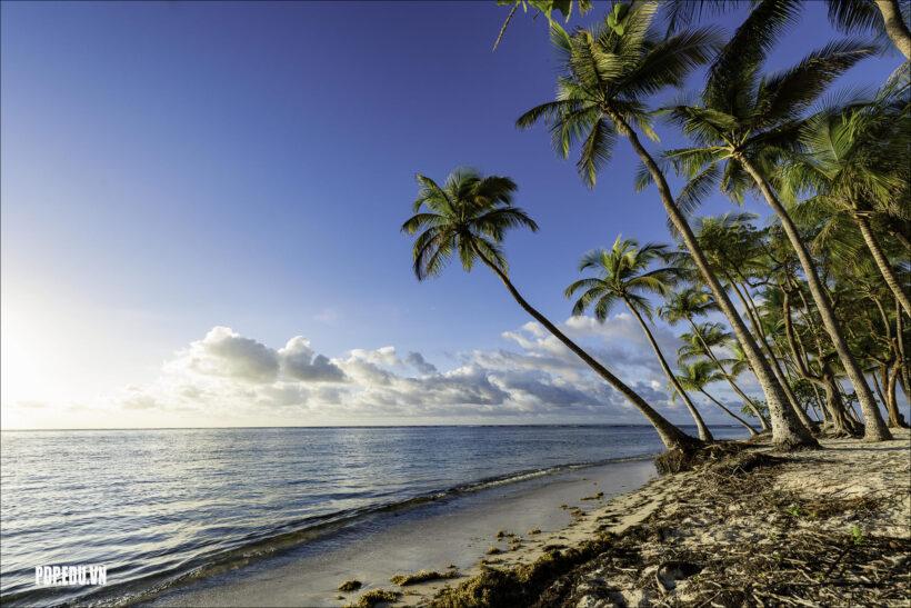 hình ảnh cây dừa mọc bên bờ biển