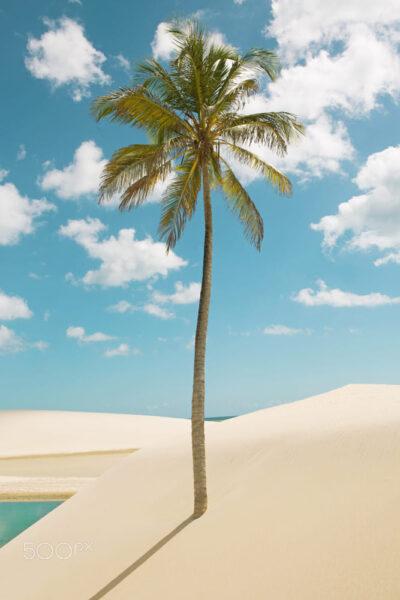 Hình ảnh cây dừa mọc trên cát