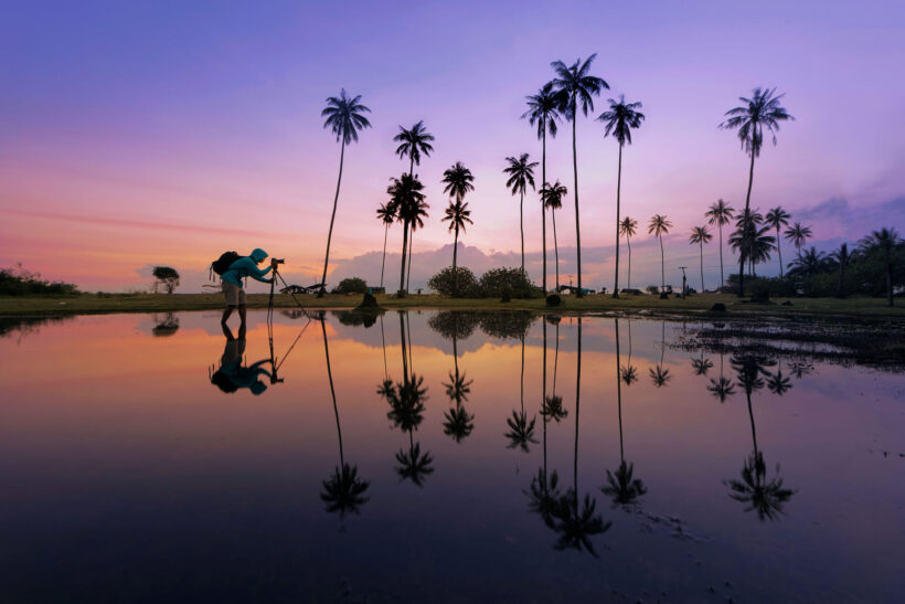 Hình ảnh cây dừa nghệ thuật