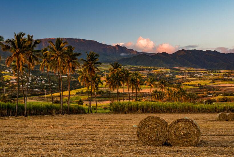 Hình ảnh cây dừa ở nông thôn
