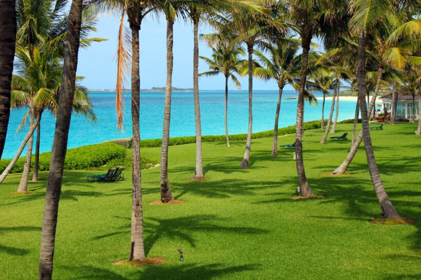 Hình ảnh cây dừa trên thảm cỏ xanh