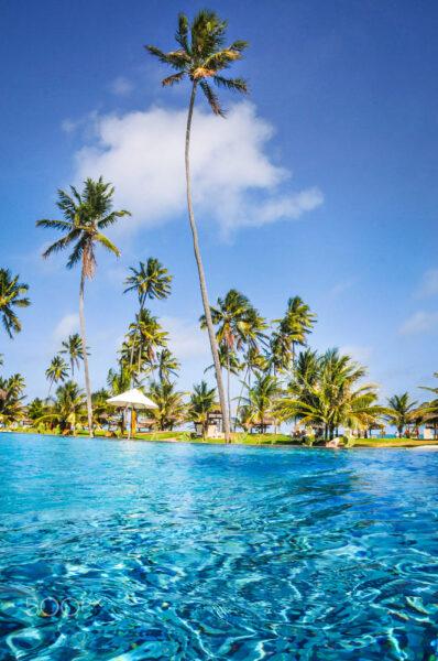 Hình ảnh cây dừa xanh mát