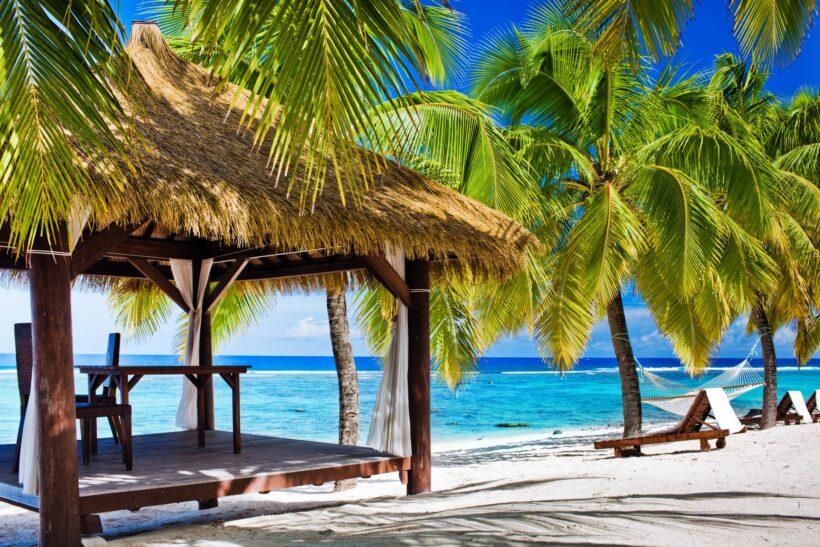 Hình ảnh nền cây dừa tuyệt đẹp