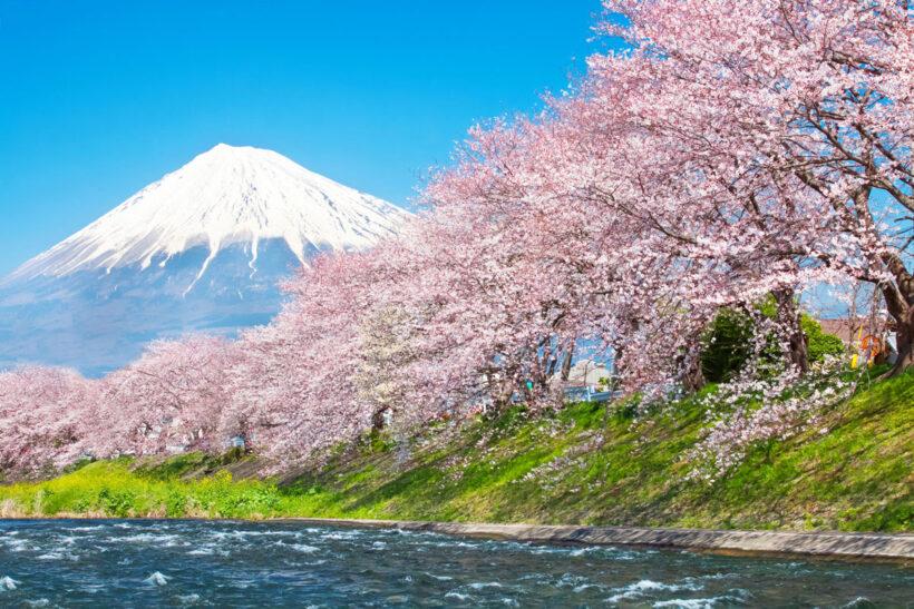 Hình ảnh Nhật Bản hoa Anh Đào đẹp mê hồn