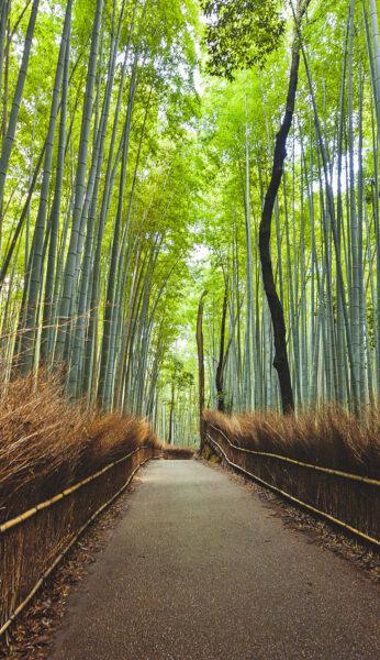 Hình ảnh Nhật Bản - Kyoto