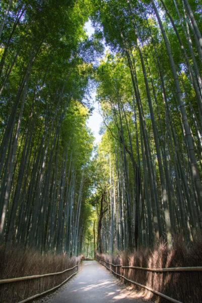 Hình ảnh ở Nhật Bản