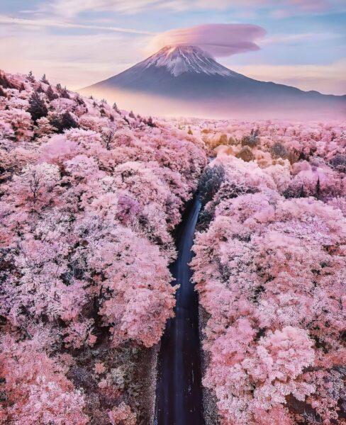 Hình ảnh phong cảnh Hoa Anh Đào Nhật Bản tuyệt đẹp