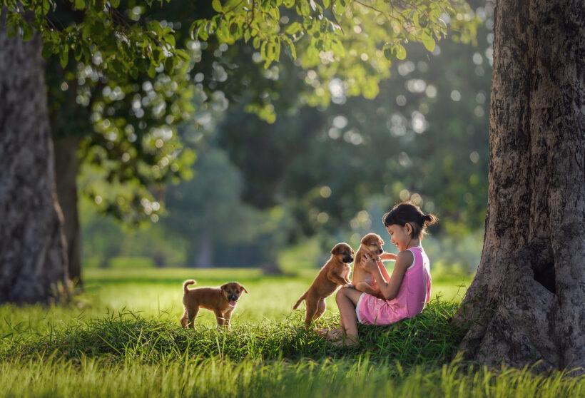 hình ảnh trẻ em chơi cùng thú cưng