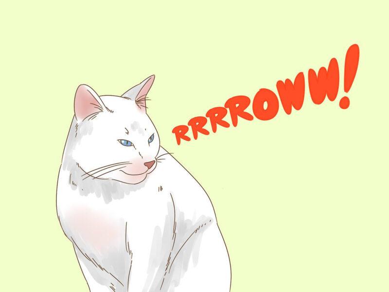 Hình ảnh vẽ con mèo