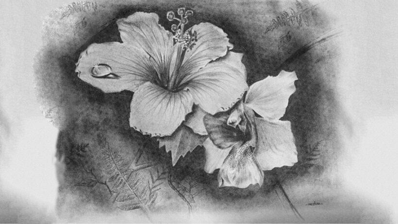Hình vẽ bông hoa đẹp bằng bút chì