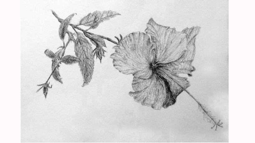 HÌnh vẽ bông hoa Râm Bụt
