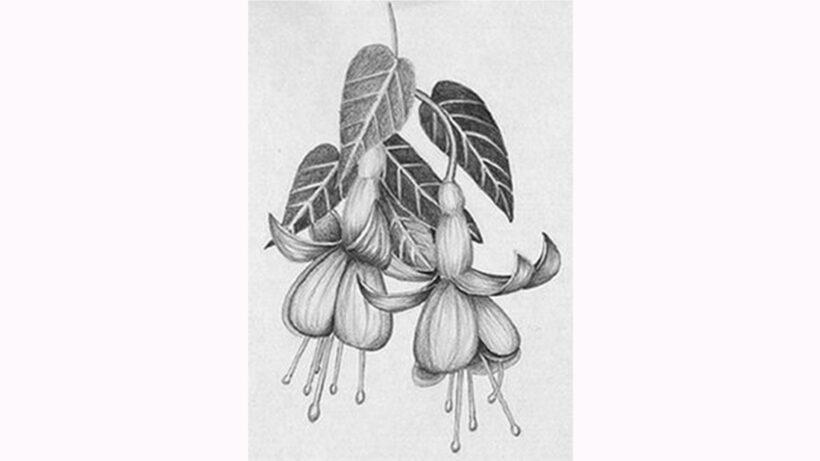 Hình vẽ chùm hoa đẹp