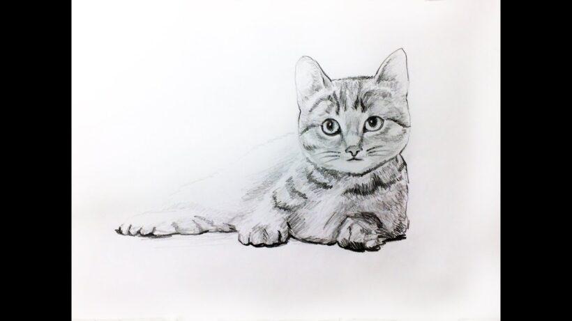 Hình vẽ con mèo đang nằm