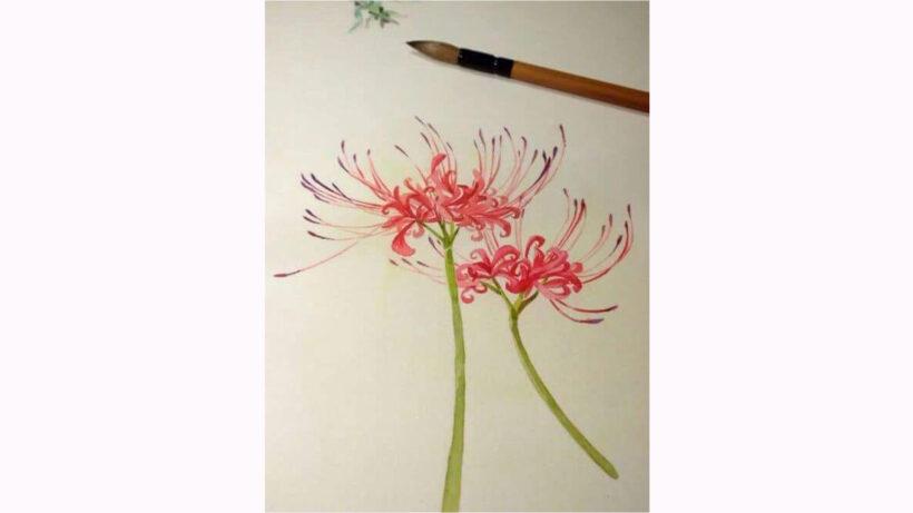 Hình vẽ hoa Bỉ Ngạn