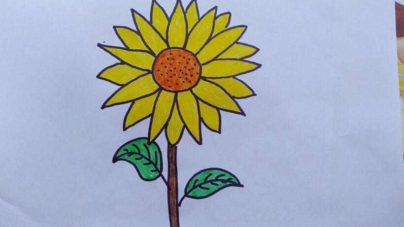 Hình vẽ hoa Hướng Dương đơn giản