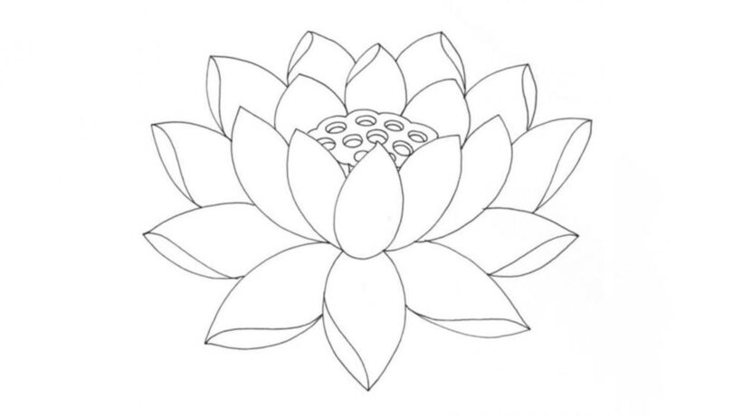 Hình vẽ hoa Sen