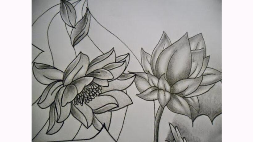 Hình vẽ hoa Sen bằng bút chì
