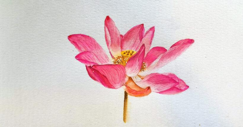 Hình vẽ hoa Sen bằng màu nước