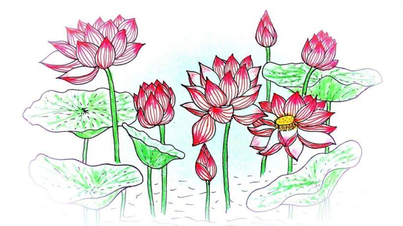 Hình vẽ hoa Sen đẹp