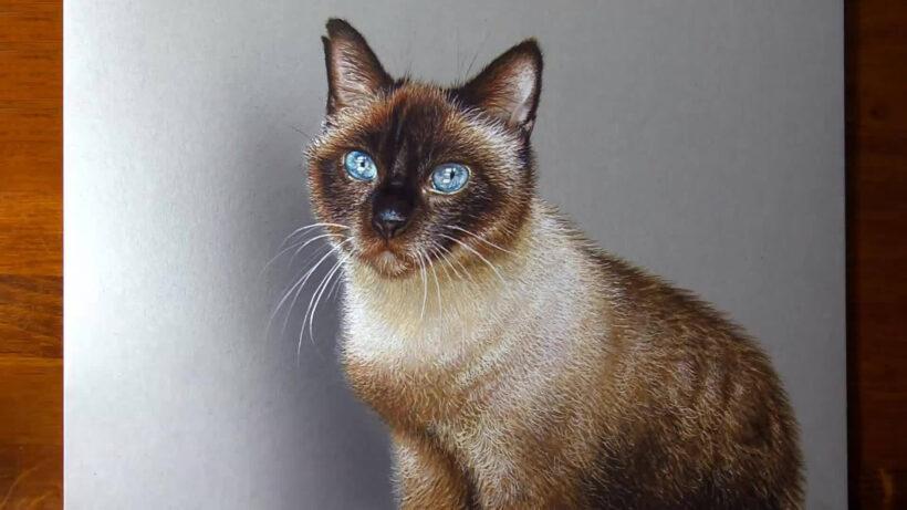 Hình vẽ mèo 3D như thật