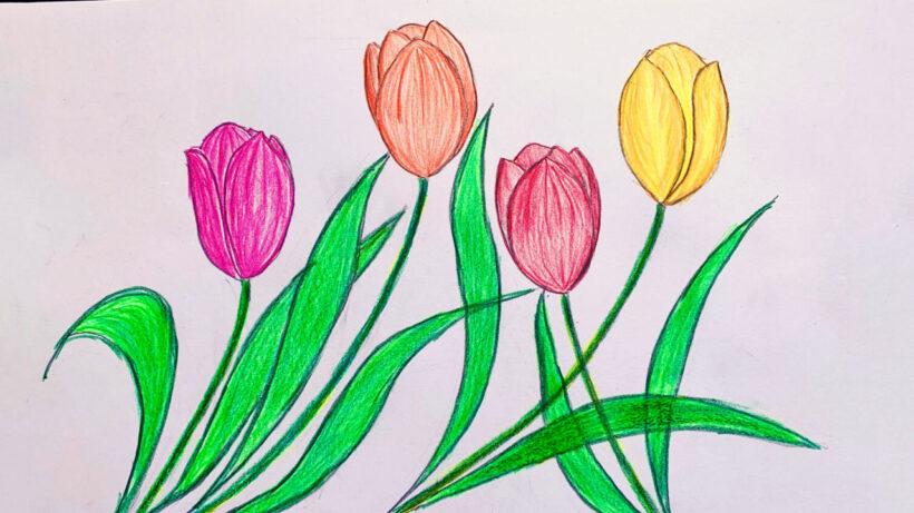Hình vẽ những bông hoa Tulip đẹp