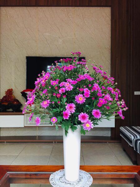 Mẫu hoa cúc tím để bàn