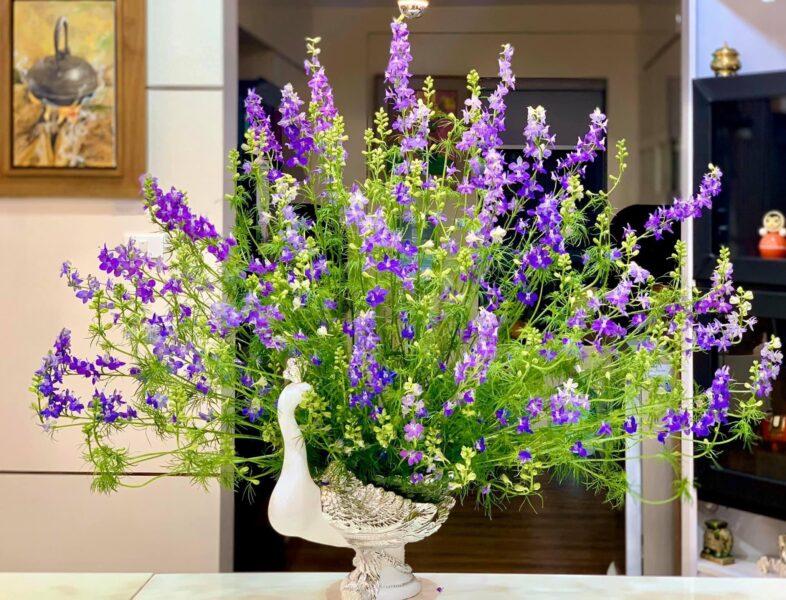 Mẫu hoa Violet để bàn cực đẹp cho ngày tết