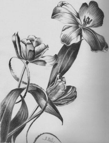 vẽ bông hoa đẹp bằng bút chì