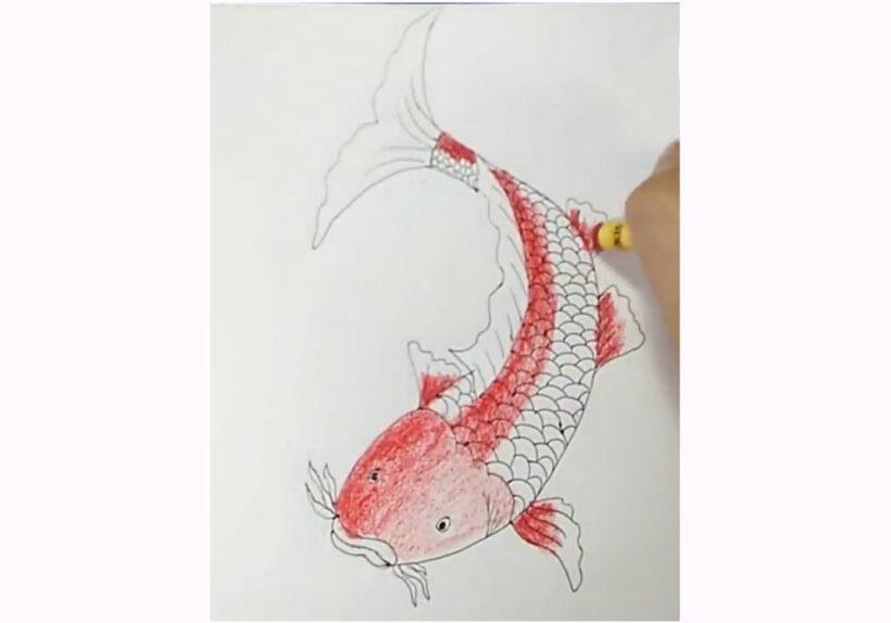 vẽ Cá Chép đơn giản