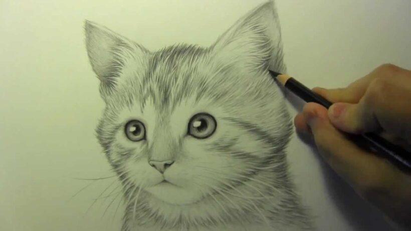 Vẽ mèo con bằng bút chì