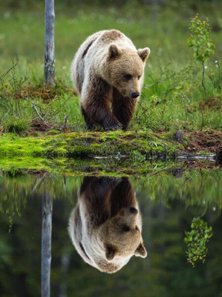 Hình ảnh con gấu hình nền gấu đẹp
