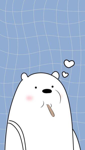 Hình ảnh con gấu hình nền gấu trắng