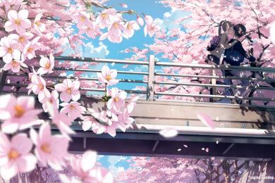 Hình ảnh hoa Anh Đào anime đẹp nhất