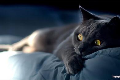 Hình ảnh mèo buồn, dễ thương nhất