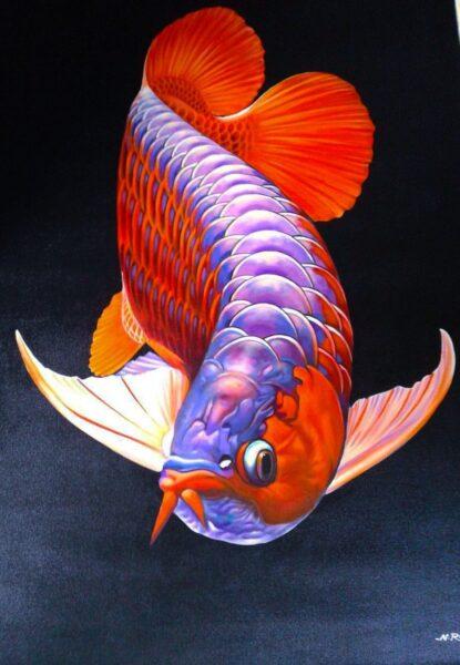 hình ảnh cá Rồng đẹp